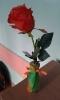 Wazon od pana na tulipana_17