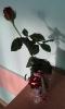 Wazon od pana na tulipana_25